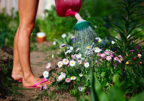 Secheresse Au Jardin Comment Arroser Les Plantes