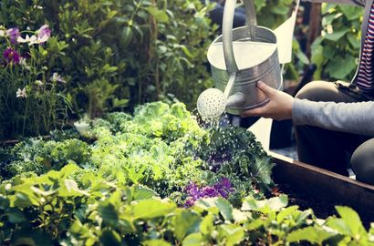 Watering plants with rainwater or tap-water