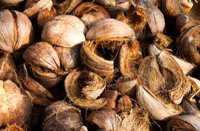Zucht auf Kokossubstrat