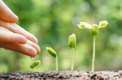 So geben Sie Ihren Samen einen guten Start